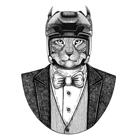 Wildcat, Lynx, Bobcat, Trot Animal vestindo jaqueta com um capacete de gravata-borboleta e hóquei ou capacete de aviador. Foto de archivo - 93280292