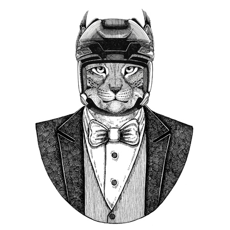 Wildcat, Lynx, Bobcat, Trot Animal wearing jacket with a bow-tie and hockey helmet or aviator helmet.