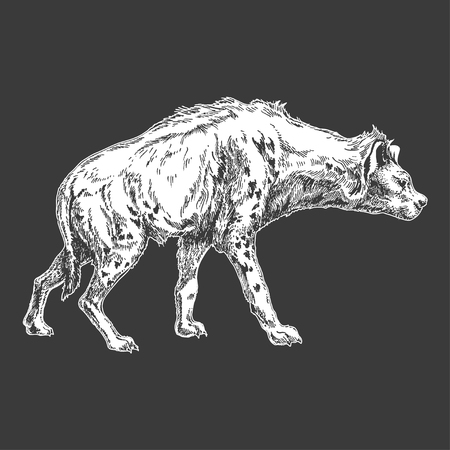 Hand drawn illustration of Hyena. Vectores