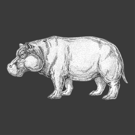 Hand drawn illustration of hippopotamus
