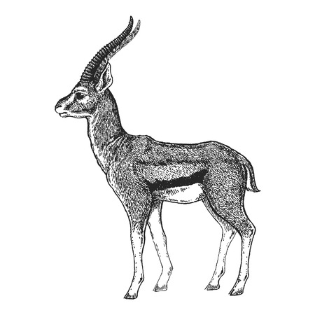 Grey and white image of an antelope