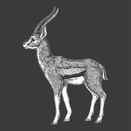 Grijs en wit beeld van een antilope op een zwarte achtergrond