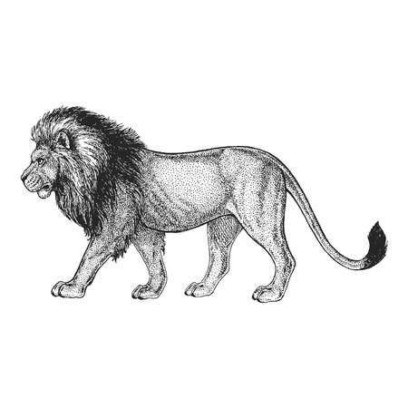 ●タトゥーデザイン用の手描きイラスト、エンブレム、バッジ、Tシャツプリント。野生動物の彫刻。クラシックヴィンテージスタイルのイメージ。  イラスト・ベクター素材