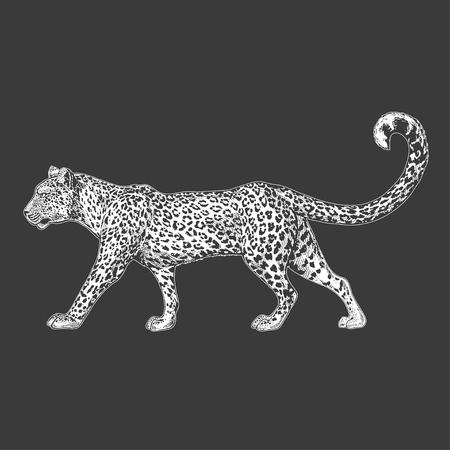 Hand drawn illustration for tattoo design, emblem, badge, t-shirt print. Engraving of wild animal. Classic vintage style image. 일러스트