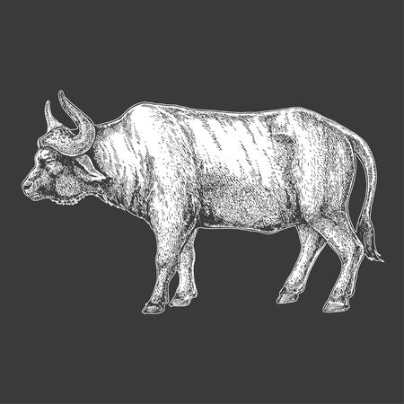 A buffalo  Hand drawn illustration for tattoo design, emblem, badge, t-shirt print. Engraving of wild animal. Classic vintage style image.  イラスト・ベクター素材