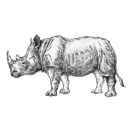 Zoo. African fauna. Rhinoceros, rhinoceros. Hand drawn illustration for tattoo design, emblem, badge, t-shirt print. Engraving of wild animal. Classic vintage style image.