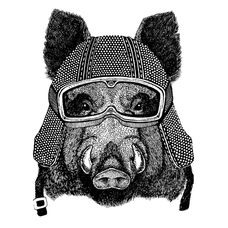 Hog, wild boar with motorcycle helmet. Vintage motorcycle headdress.