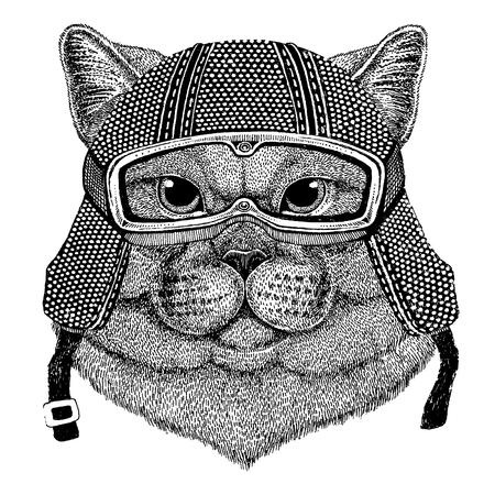 British cute cat with motorcycle helmet. Vintage motorcycle headdress.