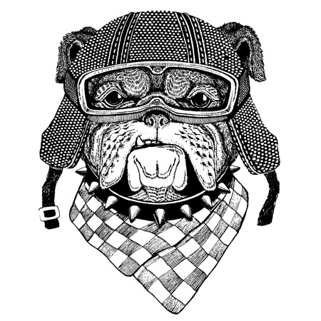 Bulldog, dog with motorcycle helmet. Vintage motorcycle headdress.