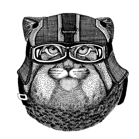 Manul, wild cat Hipster animal wearing motorycle helmet. Image for kindergarten children clothing, kids. T-shirt, tattoo, emblem, badge, logo, patch