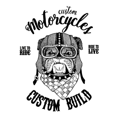 A bulldog hand drawn vintage image for t-shirt, tattoo, emblem, badge, and patch.