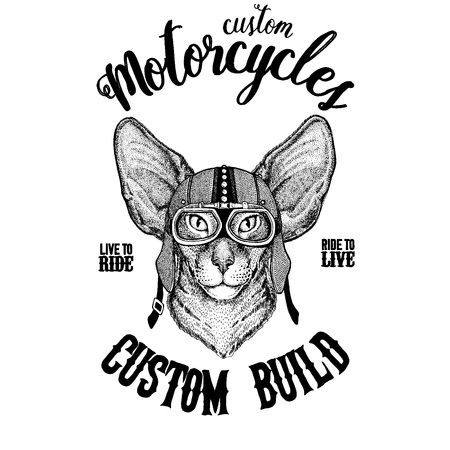 Oriental cat with big ears Biker, motorcycle animal. Hand drawn image for tattoo, emblem, badge, logo, patch, t-shirt