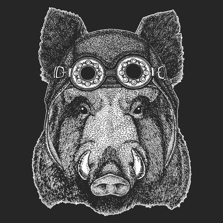 Aper, boar, hog Cool animal wearing aviator, motorcycle, biker helmet.