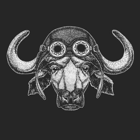 Buffalo, bull, ox Hand drawn illustration