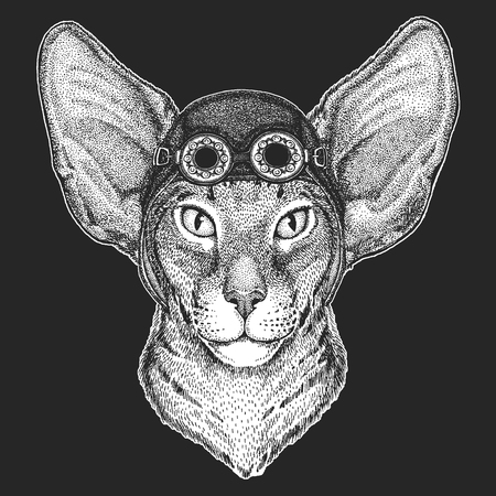 Oriental cat with big ears Hand drawn image for tattoo, emblem, badge, logo, patch Cool animal wearing aviator, motorcycle, biker helmet.