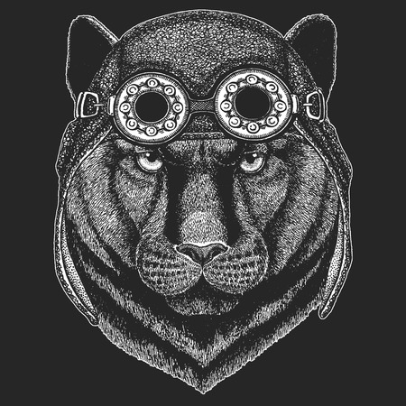 Panther Puma Cougar Wild cat Hand drawn image