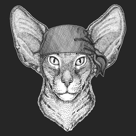 Chat oriental avec de grandes oreilles Image dessinée à la main pour tatouage, emblème, insigne, logo, patch Banque d'images - 99923302