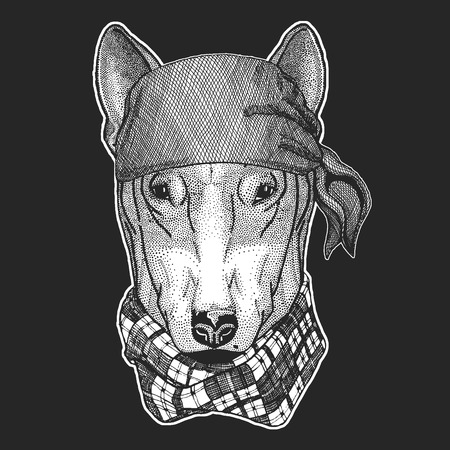 DOG for t-shirt design Cool pirate, seaman, seawolf, sailor, biker animal for tattoo, t-shirt, emblem, badge, logo, patch. Image with motorcycle bandana
