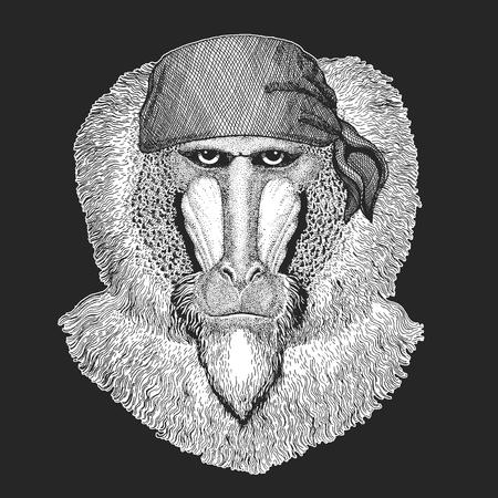 Monkey Cool pirate on black background