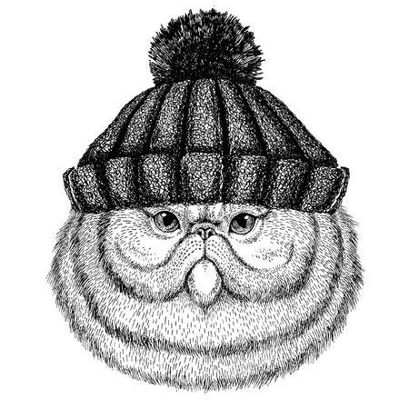 Portrait of fluffy Persian cat cool animal wearing knitted winter hat. Warm headdress beanie Christmas cap for tattoo, t-shirt, emblem, badge, icon and patch.
