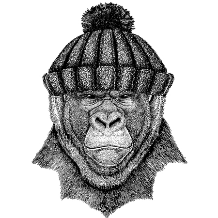 Gorilla, monkey, ape Cool animal wearing knitted winter hat. Warm headdress beanie Christmas cap for tattoo, t-shirt, emblem, badge, logo, patch Reklamní fotografie - 100359159