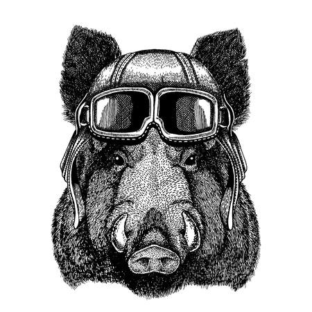 Animale da portare casco aviatore con gli occhiali. Immagine vettoriale. Aper, cinghiale, maiale, cinghiale, cinghiale, maiale, cinghiale immagine disegnata a mano per t-shirt, tatuaggio, emblema, distintivo, logo, patch