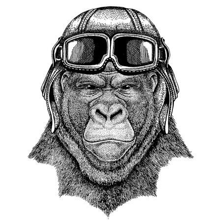 Animal wearing aviator helmet with glasses. Vector picture. Gorilla, monkey, ape Frightful animal Hand drawn image for tattoo, emblem, badge, logo, patch Stock Vector - 101043307