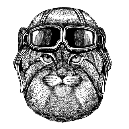 Animal wearing aviator helmet with glasses. Vector picture. Wild cat Manul Hand drawn image for tattoo, emblem, badge, logo, patch