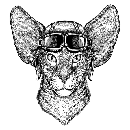 Animal wearing aviator helmet with glasses. Vector picture. Oriental cat with big ears Hand drawn image for tattoo, emblem, badge, logo, patch Illustration