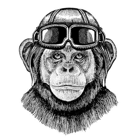 Animal wearing aviator helmet with glasses. Illustration