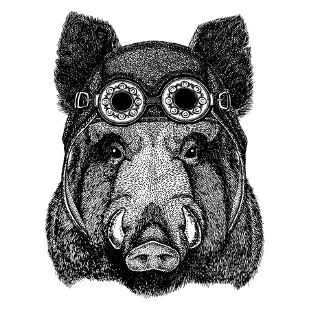Cute animal wearing motorcycle, aviator helmet Illustration