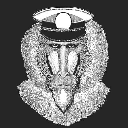 Monkey, baboon, dog-ape, ape Vector print for children. Capitan, pirate animal. Brave sailor. Design for kindergarten, school kids clothing, t-shirts. Standard-Bild - 103668884