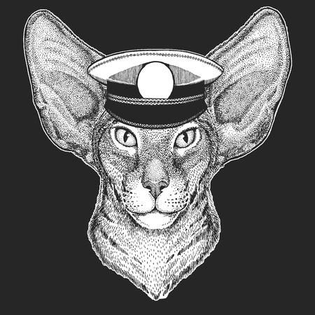Cat, oriental cat Vector print for children. Capitan, pirate animal. Brave sailor. Design for kindergarten, school kids clothing, t-shirts. Standard-Bild - 103668890