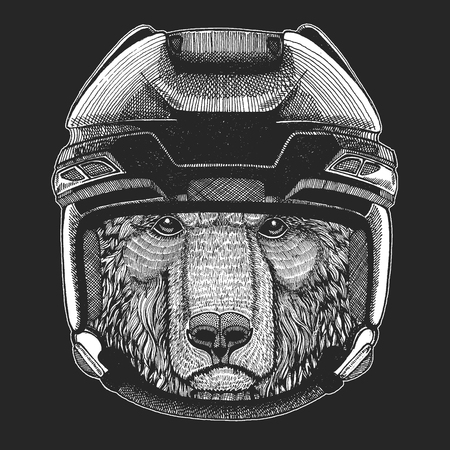 Brown bear Russian bear Wild animal wearing hockey helmet. Print for t-shirt design. Illustration