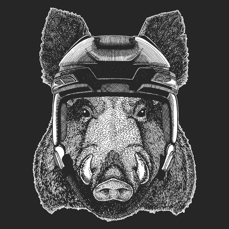 Aper, boar, hog, wild boar Wild animal wearing hockey helmet. Print for t-shirt design.