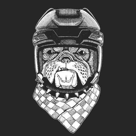 Bulldog Wild animal wearing hockey helmet. Print for t-shirt design.  イラスト・ベクター素材