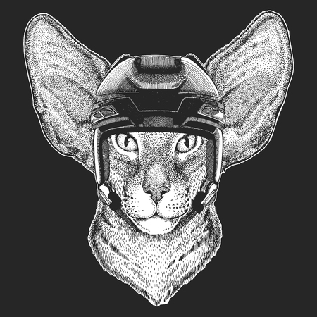 Wild animal wearing hockey helmet. Print for t-shirt design.