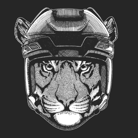 Wild tiger Wild animal wearing hockey helmet. Print for t-shirt design. Illustration