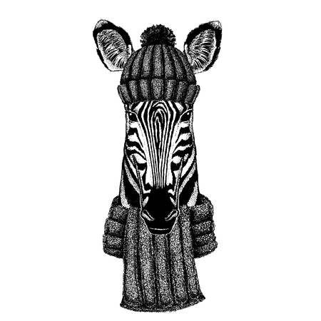 Zebra Horse Cool animal wearing knitted winter hat. Warm headdress beanie Christmas cap for tattoo, t-shirt, emblem, badge, patch