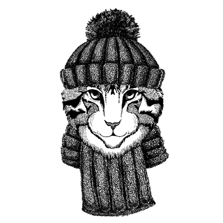 Image of domestic cat Cool animal wearing knitted winter hat. Warm headdress beanie Christmas cap for tattoo, t-shirt, emblem, badge, patch