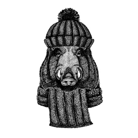 Wild hog, pig, boar, Cool animal wearing knitted winter hat. Warm headdress beanie Christmas cap for tattoo, t-shirt, emblem, badge, patch