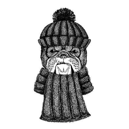 Dog Cool animal wearing knitted winter hat. Warm headdress beanie Christmas cap for tattoo, t-shirt, emblem, badge, patch Illustration