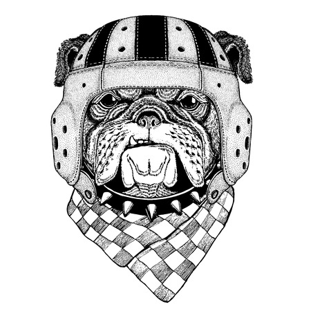 Cool animal wearing rugby helmet Extreme sport game Bulldog Hand drawn vintage image for t-shirt, tattoo, emblem, badge, patch