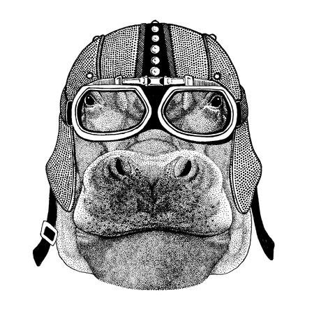 Hippo, Hippopotamus, behemoth, river-horse Illustration
