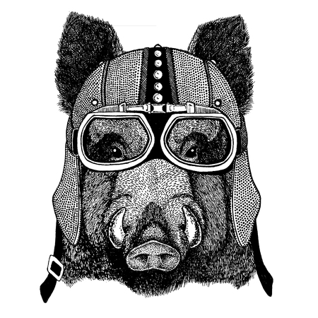 Aper, boar, hog, wild boar wearing motorcycle, aero helmet. Biker illustration for t-shirt, posters, prints.