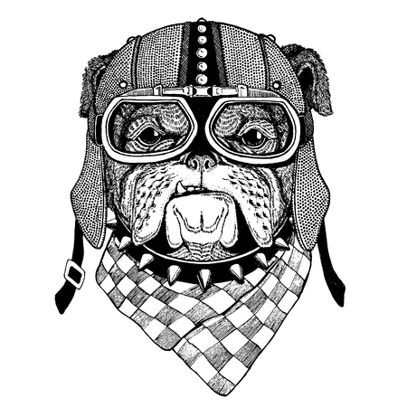 Bulldog, dog wearing motorcycle, aero helmet. Biker illustration for t-shirt, posters, prints. Illusztráció