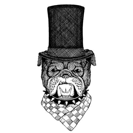 Wild animal wearing top hat, cylinder. Hipster dog, bulldog Illustration