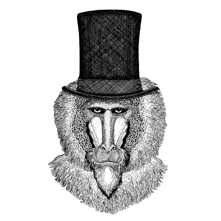 Wild animal wearing top hat, cylinder. Hipster Stock Illustratie
