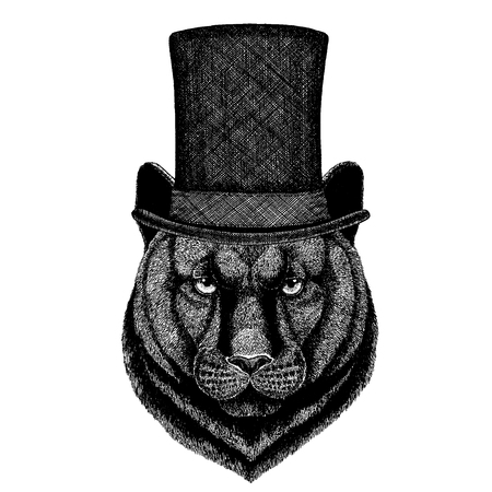 Wild animal wearing top hat, cylinder. Hipster panther, Puma, Cougar, cat