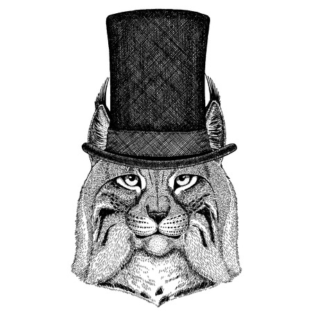 Wild animal wearing top hat, cylinder. Hipster wild cat, Lynx, Bobcat, Trot Archivio Fotografico - 118919933